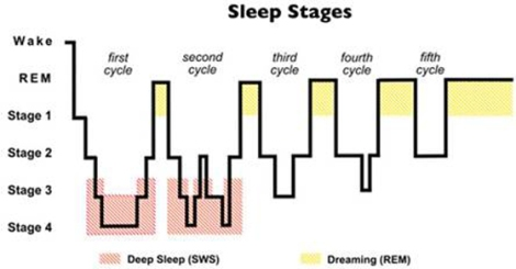 sleepstages